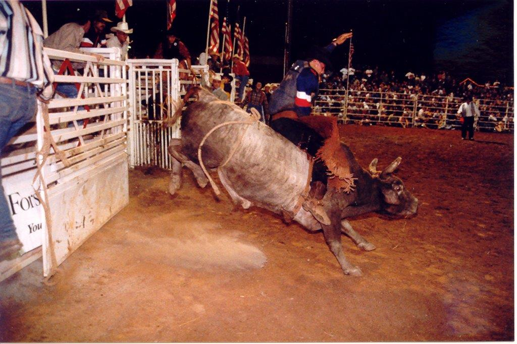 bulldog300